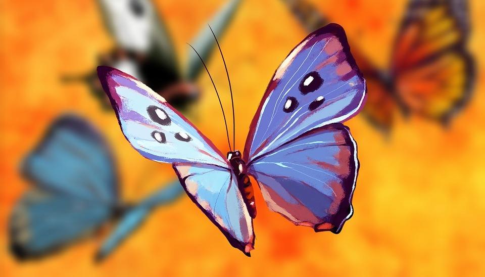 motylem jestem