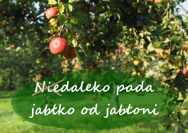 niedaleko-pada-jablko