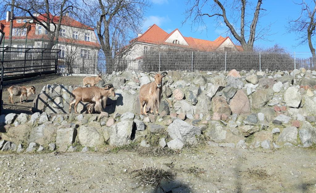 zoo toruń