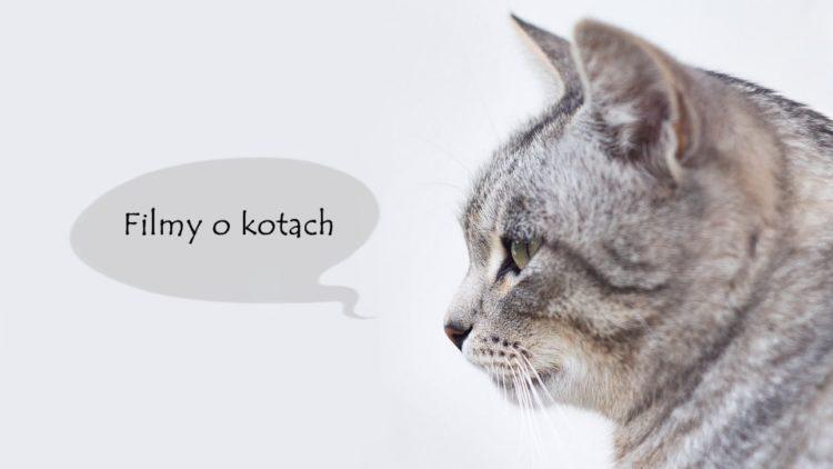 filmy o kotach