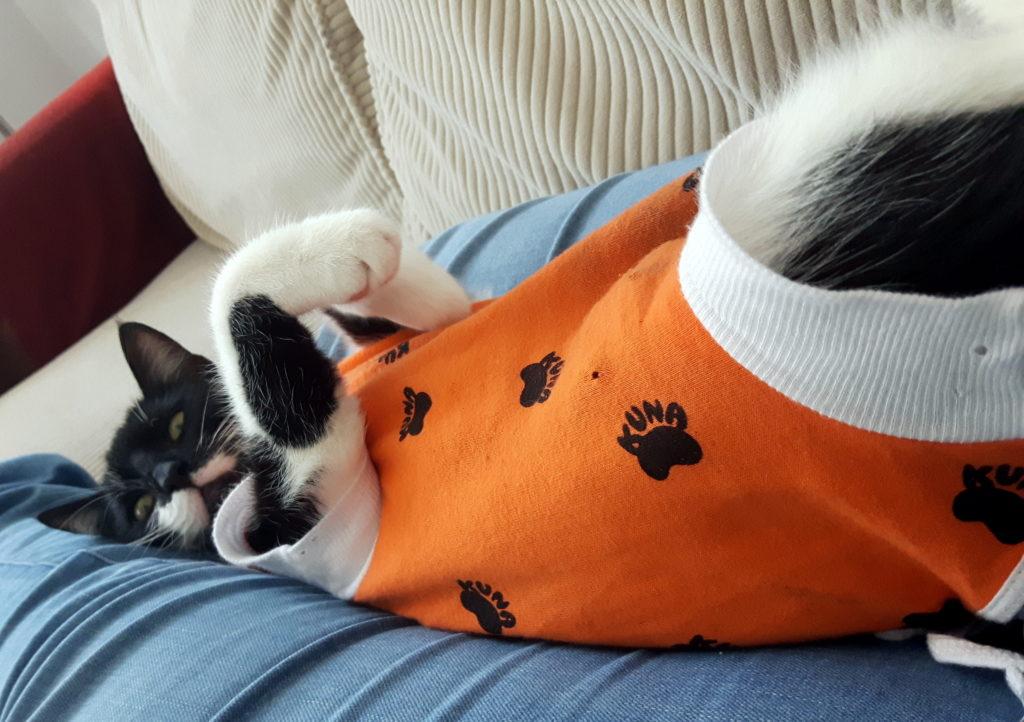 sterylizacja kotki