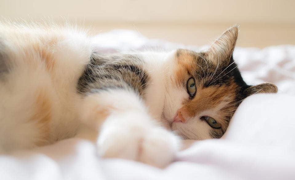 sprawy łóżkowe