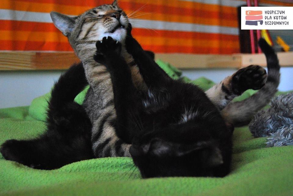 Hospicjum dla Kotów Bezdomnych