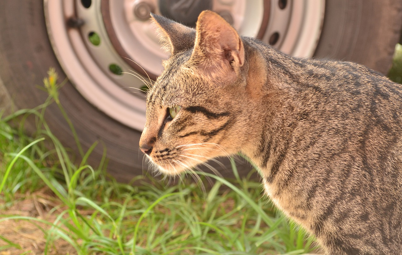 kot wychodzący na dwór