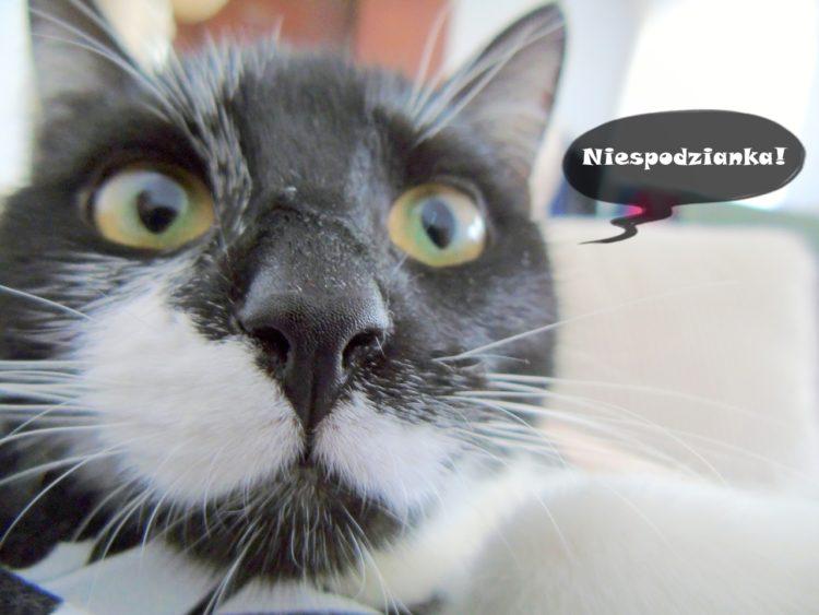 Co najbardziej zaskoczyło mnie w posiadaniu kota?