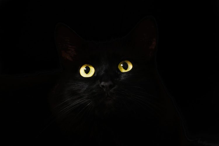 mity dotyczące kotów